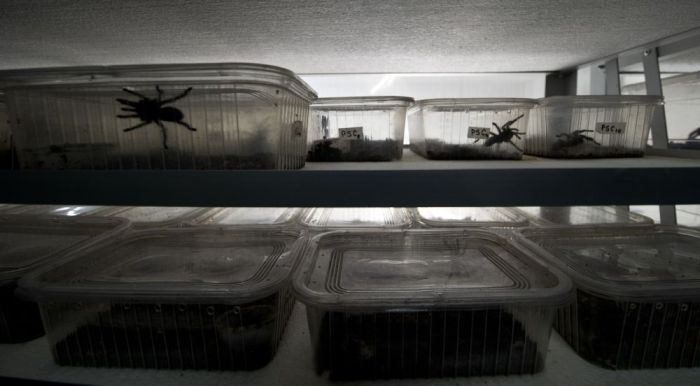 Spider Farm in Chile (19 pics)