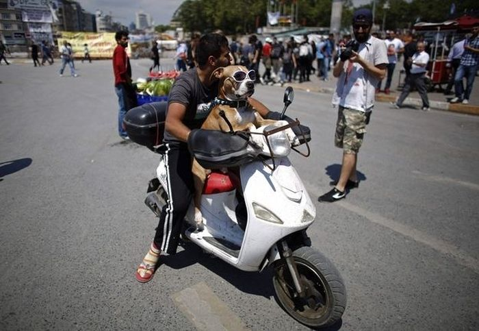 Riot Dog of Istanbul (9 pics)