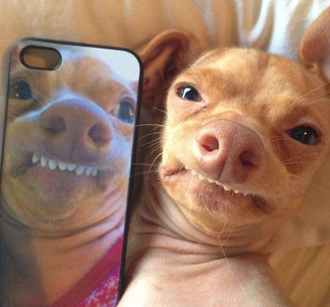 Tuna the Dog (8 pics)