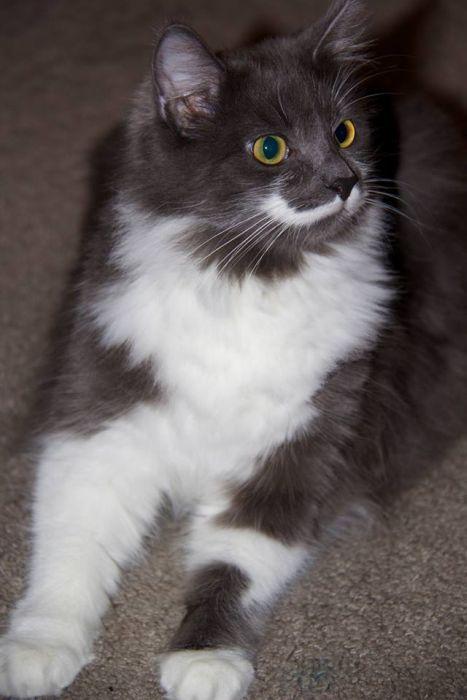 Mustache Kitten (19 pics)