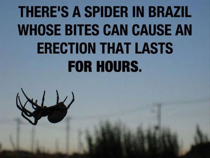 Amazing Scientific Facts (13 pics)