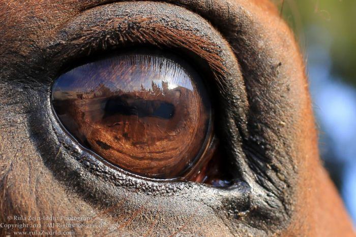 Mesmerizing Eyes Photography (20 pics)