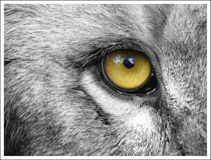 Mesmerizing Eyes Photography (20 pics)