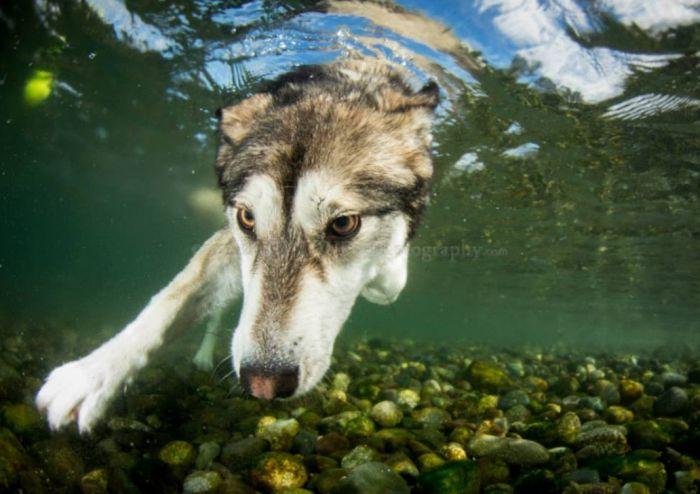 Underwater Dogs (14 pics)