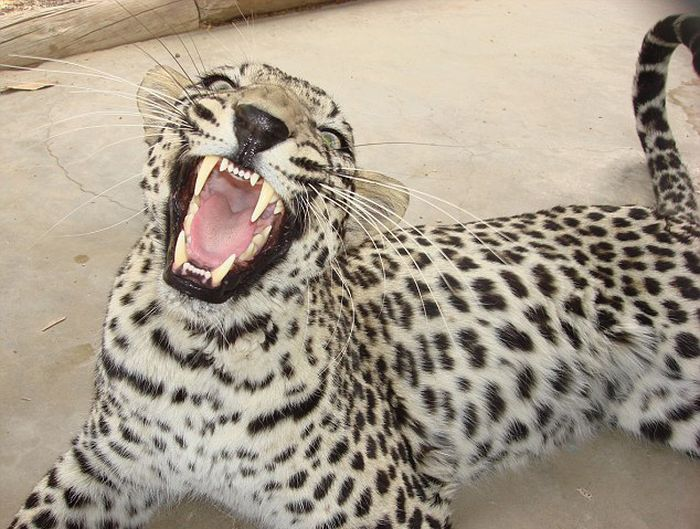 Animal Dentist (19 pics)