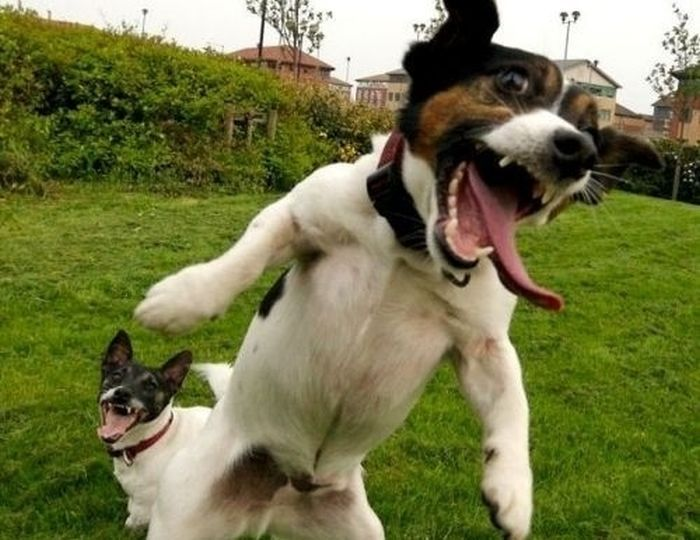 Happy Dogs (60 pics)