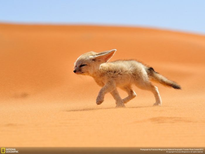 Beautiful Wildlife Photos From The National Geographic (35 pics)