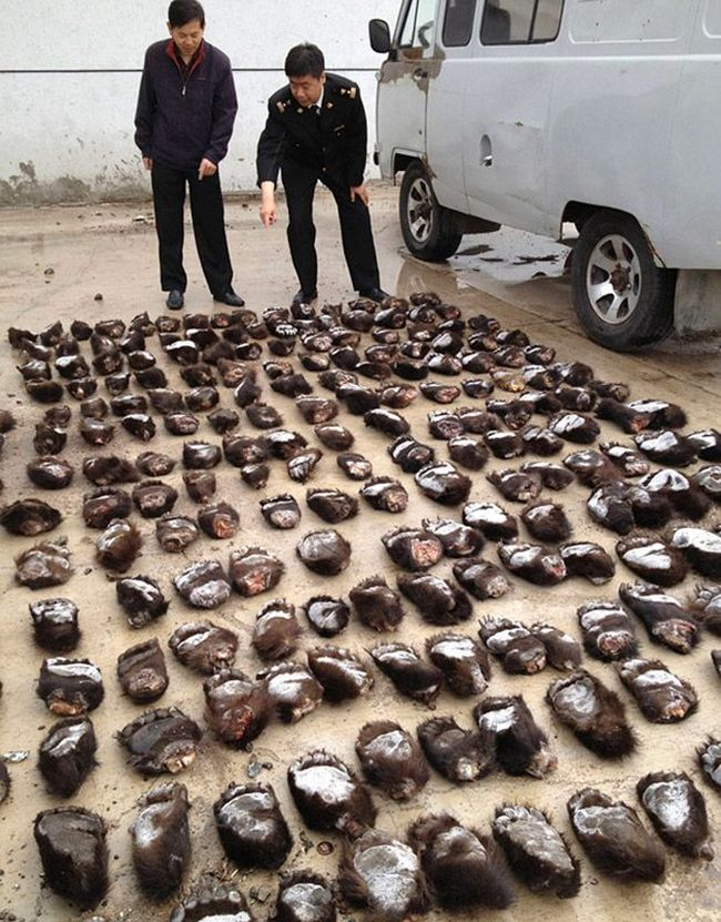 213 Bear Paws from Russia (2 pics)