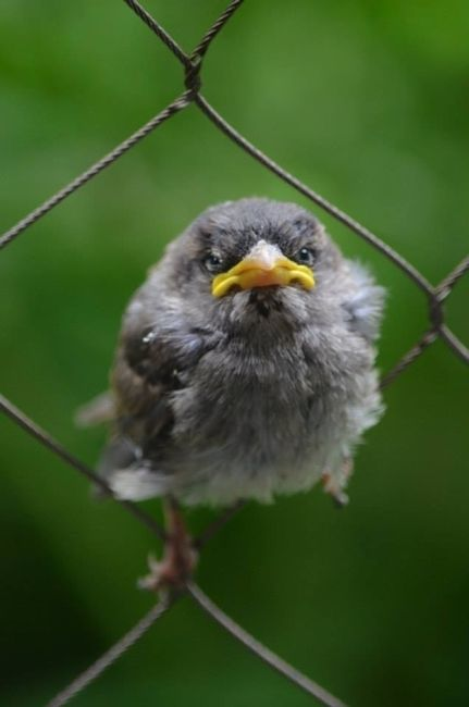Angry Birds. Literally (25 pics)