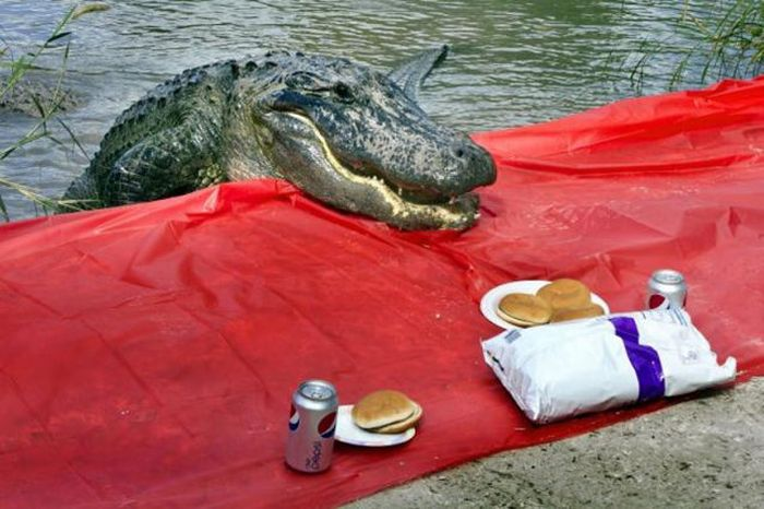 Picnic in Florida (4 pics)
