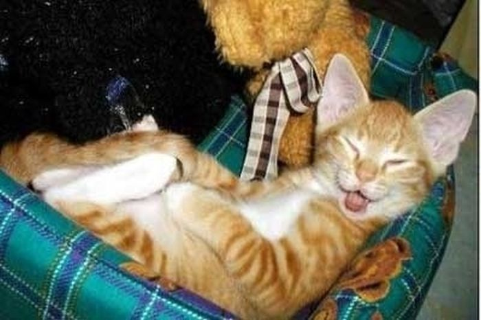 Happy Cats (53 pics)
