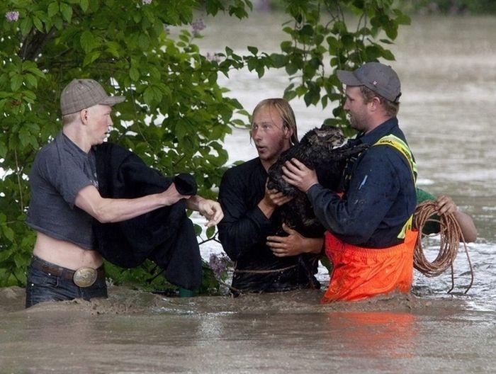 Guy Rescues a Cat (5 pics)