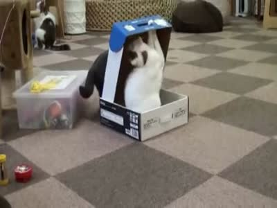 Just Stay Inside the Box