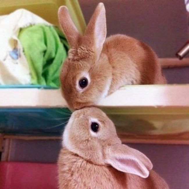 The Cutest Animal Photos You Will See Today (50 pics)