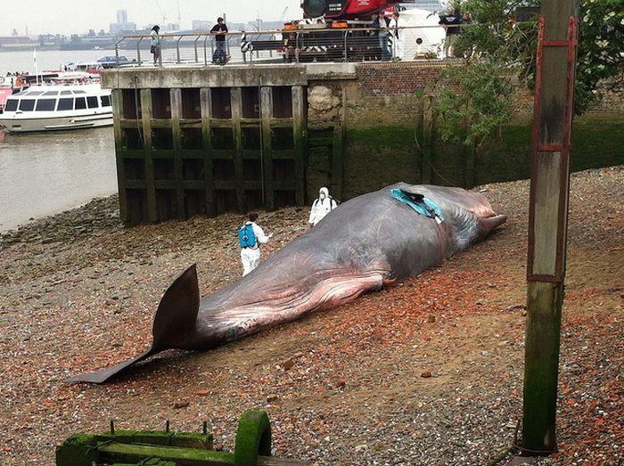 Beached Whale Art (8 pics)