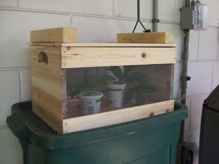 Breeding Butterflies at Home (12 pics)