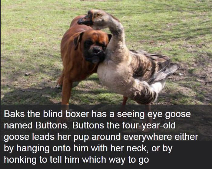 Interesting Facts About Dogs (25 pics)