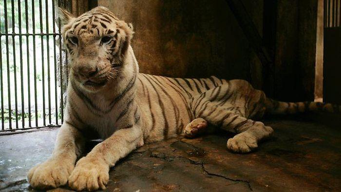 Animal Hell Called Surabaya Zoo (10 pics)