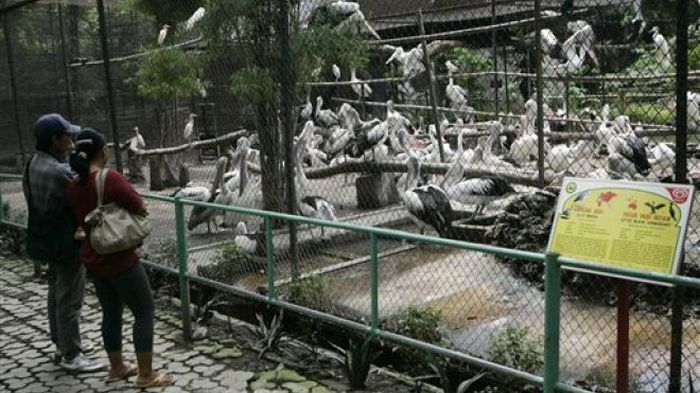 Animal Hell Called Surabaya Zoo (10 pics)