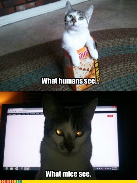 Funny Commixed Pictures. Part 10 (40 pics)