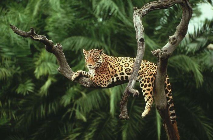 Amazon Forest Photo Tour (36 pics)