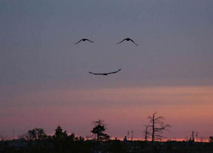 Please Smile (42 pics)