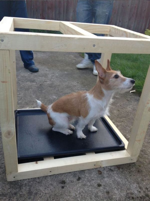DIY Dog House (12 pics)