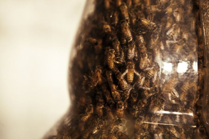 3D Printer Made Out of Bees (20 pics)