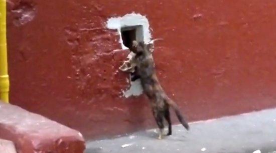 Hilarious Cat Hunter Fail