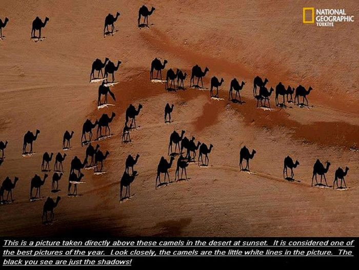 Beautiful Images and Interesting Facts (25 pics)