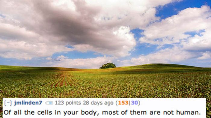 Facts About Human Body (18 pics)