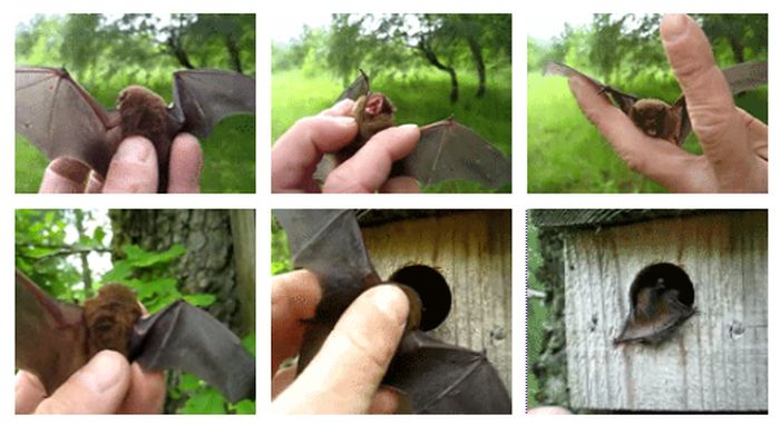 New House for a Baby Bat (6 gifs)