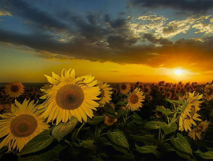 Beauty of the Sun (40 pics)