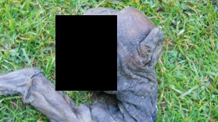 Alien Creature from South Africa is a Baby Baboon (3 pics)