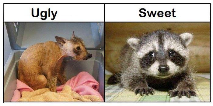 Ugly vs Sweet (7 pics)