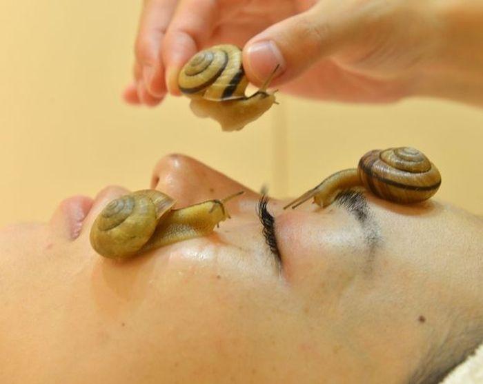 Snail Spa (4 pics)