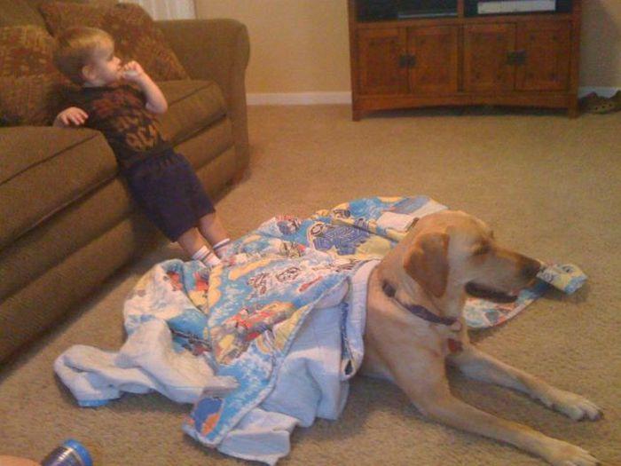 Kid and Dog Friendship (24 pics)