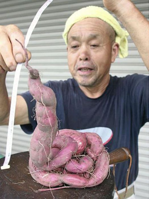 Mutants of Fukushima (35 pics)
