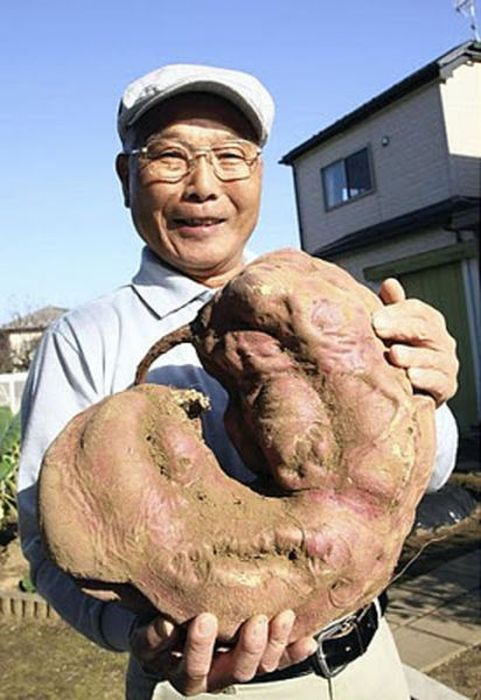Mutants of Fukushima (35 pics)