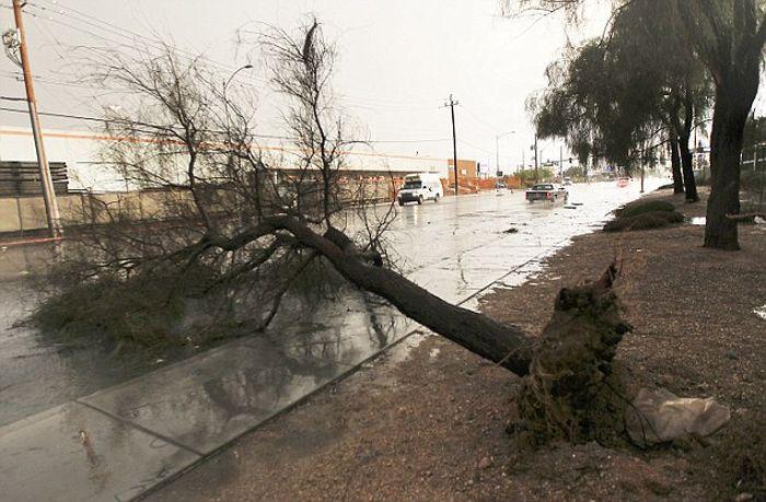 When Las Vegas Floods (19 pics)
