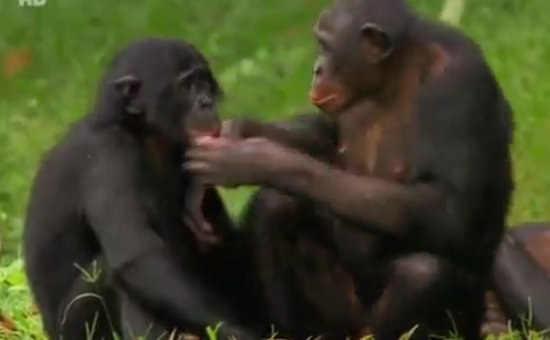 Relations Between Man and Woman as Shown by Monkeys