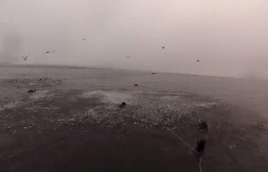 Whale Almost Eats Scuba Divers