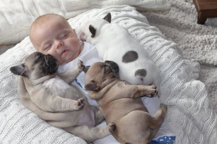 Baby and Puppies (7 pics)