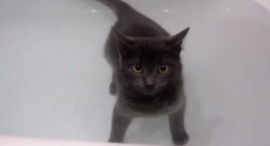Cat Breaks All the Known Rules