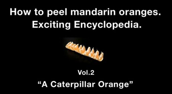 Caterpillar Orange (4 pics)