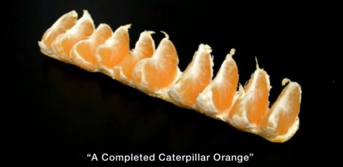 Caterpillar Orange (4 pics)
