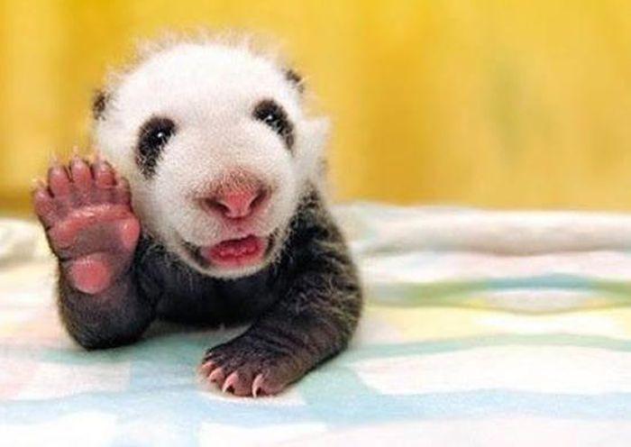 Animals Say Hi (24 pics)
