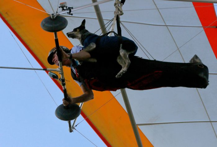 Paragliding Dog (4 pics)