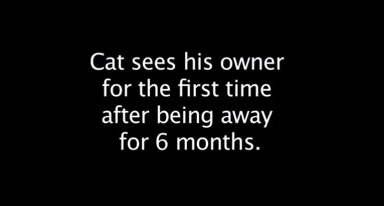 Cat Meets Its Owner After Being Away