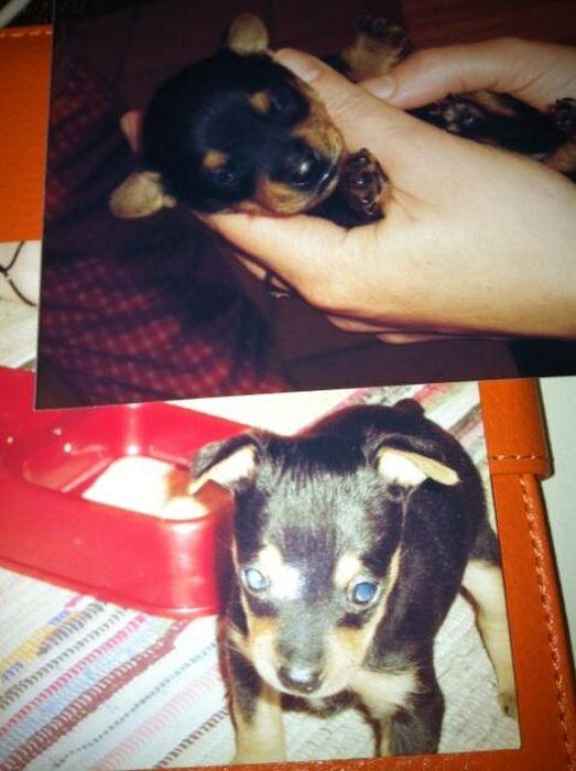 Baby Pets (84 pics)